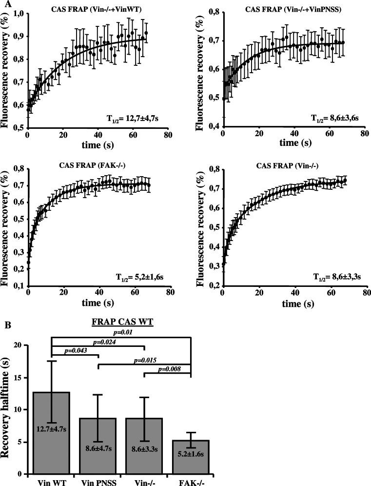 Dependence of CAS dynamics on FAK and vinculin within focal adhesions. a FRAP curves of CAS-Venus associated with focal adhesions in MEFs lacking FAK or vinculin, or re-expressing either Vin WT or mutated Vin PNSS. Numbers indicate average half-maximum recovery times ( t 1/2). b The bar plot shows average half-maximum recovery times of CAS-Venus in different MEFs. Error bars represent standard errors
