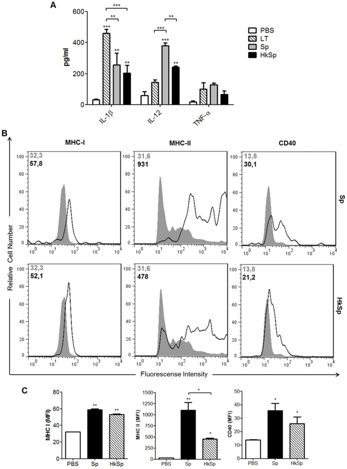 Maturation of dendritic cells after stimulation with B. subtilis spores. (A) Induction of pro-inflammatory cytokines after stimulation with spores. BMDCs from C57BL/6 mice were treated with PBS (control group), LT1 and live or heat-killed spores at a MOI of 10.000. Supernatants were collected after 24 h, and the IL-1β, IL12p70 and TNF-α concentrations were quantified by ELISA. (B) Expression of surface molecules by CD11c + cells following exposure to spores. BMDCs were treated as described above and the surface expression levels of CD40, MHC-I and MHC-II were measured by flow cytometry. Gray-filled histograms represent samples incubated with PBS and open histograms represent samples incubated with spores. The MFI for both conditions is shown in the upper left in each histogram. (C) Graphical comparison of the expression of CD40, MHC-I and MHC-II. Data represent mean values ± s.e.m. of two independent experiments. * p