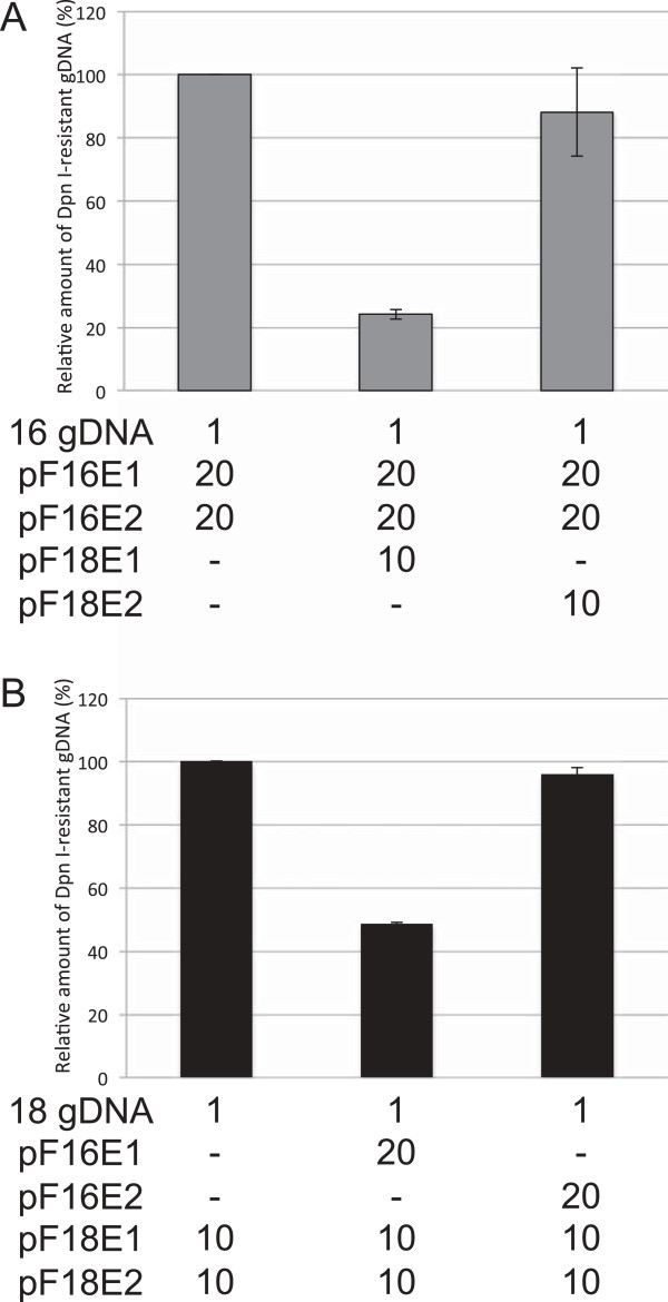 Effects of heterologous E1 or E2 on HPV16/18 replication. C33A cells were transfected with 1 ng of the HPV16 (A) or HPV18 (B) gDNAs together with the indicated amounts (ng) of the expression plasmids for E1/E2s. Three days after transfection, low molecular weight DNA was isolated by the Hirt procedure and digested with Dpn I. The Dpn I-resistant HPV gDNA was quantified by real-time PCR and normalized to that of the luciferase gene. The level of the replication was presented as the relative amount of the Dpn I-resistant DNA compared to that obtained by the replication with the homologous E1/E2 alone. Each bar represents the average of two independent experiments with the standard error of mean.