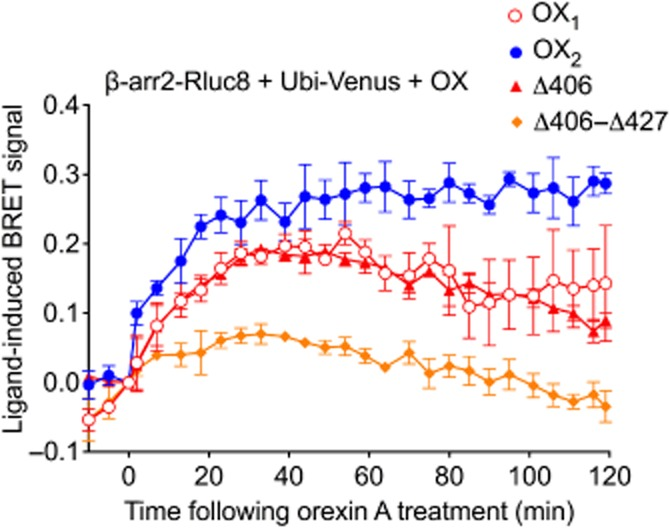 eBRET data indicating proximity between ubiquitin and β-arrestin2 in the presence of wild-type OX 1 , OX 2 or OX 2 mutant receptors. HEK293FT cells were transiently transfected with N-terminally Venus-tagged ubiquitin, C-terminally Rluc8-tagged β-arrestin2 and non-BRET-tagged OX 1 , OX 2 , OX 2 Δ406 or OX 2 Δ406-Δ427 receptors. The zero time point indicates when 0.6 μM orexin A was added. Data are presented as mean ± SEM of three independent experiments.