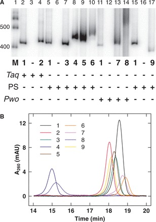 Characterization of DNA analogs. ( A ) PCR assays analyzed by 5% native polyacrylamide gel electrophoresis. Total PCR volume 100 µl: 20 ng 418-bp DNA template (pJ1506), 0.4 mM each LJM-3222 (5'-G TA CGC AG T ) and LJM-3223 (5'-TGTGAGT AGCTCACTCAT AG ), 0.2 mM each dNTP with indicated analog triphosphate ( 1–9 ) completely replacing appropriate dNTP, and 5 U DNA polymerase (indicated with plus symbol) with associated buffer and cycle conditions. Taq DNA polymerase ( Taq ) conditions: Taq DNA polymerase buffer with 100 mg/ml BSA and 2 mM MgCl ; 98°C (3 min), 30 cycles of [94°C (30 s), 60°C (30 s), and 72°C (45 s)], 72°C (5 min). PrimeSTAR HS DNA polymerase (PS) conditions: PrimeSTAR GC buffer with 2 M betaine; 98°C (3 min), 30 cycles of [98°C (15 s), 60°C (5 s), and 72°C (45 s)], 72°C (5 min). Pwo SuperYield DNA Polymerase ( Pwo ) conditions: Pwo PCR buffer with GC-rich solution and 2 M betaine; 98°C (3 min), 30 cycles of [98°C (1 min), 60°C (2 min), and 72°C (8 min)], 72°C (5 min). Lane 1 is marker (M) DNA (100 bp DNA ladder, Invitrogen) with 400 - and 500-bp bands indicated. ( B ) Anion exchange chromatography of 98-bp DNA-like polymers (pJ1923). Following equilibration in 20 mM Tris–HCl, pH 8 (buffer A), samples were eluted over 25 min at a 1 ml/min flow rate in a linear gradient from 50 to 100% buffer B (buffer A plus 1 M NaCl). Eluent absorbance at 260 nm (milli-absorbance units) was monitored with elution time (min).