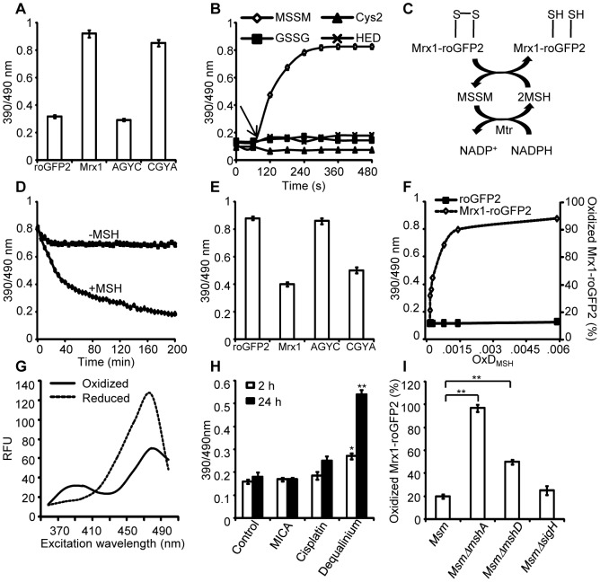 Mrx1 catalyzes specific equilibration between <t>mycothiol</t> redox system and roGFP2 in vitro and in vivo . (A) Pre-reduced roGFP2 (lane 1), Mrx1-roGFP2 (lane 2), Mrx1(AGYC)-roGFP2 (lane 3), and Mrx1(CGYA)-roGFP2 (lane 4) were exposed to 50 µM of MSSM for 10 min and ratiometric sensor response was measured. (B) Pre-reduced Mrx1-roGFP2 was treated with 1 µM of MSSM, GSSG, cystine (Cys 2 ) or 2-hydroxyethyl disulfide (HED) and ratiometric sensor response was measured at various time points. (C) Molecular mechanism showing the reduction of oxidized Mrx1-roGFP2 by <t>MSH/Mtr/NADPH</t> pathway. (D) Oxidized Mrx1-roGFP2 was added as a substrate to the MSH/Mtr/NADPH redox pathway and ratiometric sensor response was measured over time. A control reaction in the absence of MSH was performed in parallel. (E) Reduction of oxidized roGFP2 (lane 1), Mrx1-roGFP2 (lane 2), Mrx1(AGYC)-roGFP2 (lane 3), and Mrx1(CGYA)-roGFP2 (lane 4) by MSH/Mtr/NADPH redox pathway. Maximum ratio change after 150 min of incubation with MSH/Mtr/NADPH reaction mixture is shown. (F) Mrx1-roGFP2 is extremely sensitive towards small changes in OxD MSH . Reduced uncoupled roGFP2 and Mrx1-roGFP2 proteins were incubated with mycothiol solutions (1 mM total) containing increasing fractions of MSSM for a maximum of 30 sec and ratiometric sensor response was measured. Note that the response of Mrx1-roGFP2 becomes exceedingly linear in the window between 10% to 90% oxidation, suggesting that the biosensor can effectively measure changes in E MSH within this range of probe oxidation. (G) Excitation spectra of Msm expressing Mrx1-roGFP2 upon treatment with 0.4 mM of diamide (oxidant) or 10 mM of DTT (reductant) for 5 min. (H) Msm expressing Mrx1-roGFP2 was either left untreated (control) or exposed to 50 µM dequalinium, cisplatin and 5-methoxyindole-2-carboxylic acid (MICA) and ratiometric sensor response was measured after 2 h and 24 h post-exposure. p-values shown in the panel were calculated by comparing untre