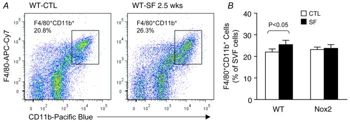 SF-induced selective increase in the number of pro-inflammatory M1 macrophages in visceral fat of wild-type, but not Nox2-deficient mice A. A representative flow cytometry analysis showing an increase in the number of CD11c + M1 macrophages in visceral fat of a WT mouse exposed to SF for 2.5 weeks. Such SF-induced effect on the pro-inflammatory M1 subset was not observed in Nox2-deficient gp91 phox-/Y mice. B. Summary of 5 independent flow cytometry experiments. Notice that SF-induced decrease in the M2 subset was not significant at this stage of chronic SF. Data are mean ± SE; n=5 for each group.