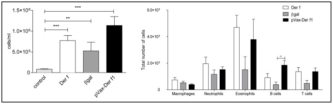 Effect of immunization protocol on BAL inflammation of non asthmatic non vaccinated mice (light grey bar, n = 8), Der f mice (open bar, n = 9), pCMV-βgal (grey bar, n = 7) and pVAX-Der f1 mice (black bar, n = 7) when using 10 µg of DNA. The total number of cells was determined by cell count on Kova slides. The cellular composition was established by flow cytometry. Results are expressed as absolute number of cells, as the mean and standard deviation for each group. **p