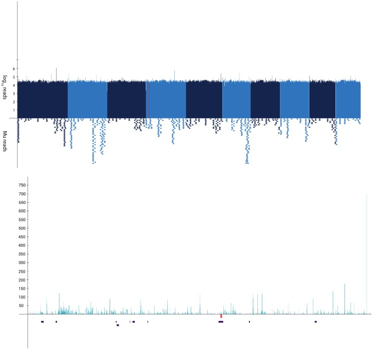 Manhattan plot of la1-mu1 Taq α I sequencing. ( A ) Manhattan plot showing the distribution of reads from la1-mu1 genomic DNA mapped throughout the B73 genome. Alternating colors represent each of the ten maize chromosomes. Each x-axis pixel represents a bin of 1 Mb and the logarithmic y-axis denotes the number of reads mapping to each bin. The red line represents the known genetic map position for the la1 reference mutation. Each triangle below the plot represents the approximate location of mapped MFS. ( B ) Expanded Manhattan plot of a 1 Mb interval corresponding to the approximate map position of la1 . Same as top with each x-axis pixel representing a bin of 1 kb. Filtered genes in the 1 Mb interval are shown as black rectangles. MFS mapping to this interval are shown as inverted red triangles.