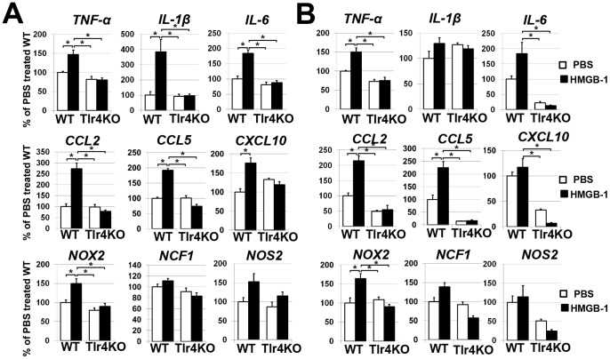 HMGB-1 induces expression of pro-inflammatory markers in astrocytes (A) and microglial cells (B) isolated from wild type (WT) animals. TLR4 deficiency (Tlr4KO) suppresses induction of pro-inflammatory markers after HMGB-1 treatment. Gene expression was assessed using quantitative RT-PCR in PBS treated controls and HMGB-1 treated cells. For each gene, results are expressed as a percentage of the corresponding value in the PBS treated primary glial cell cultures isolated from WT animals after normalization to β-actin (*P
