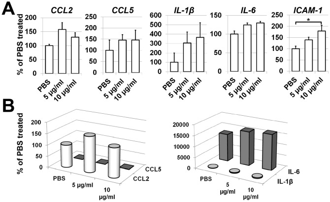 HMGB-1 can affect retinal endothelial cell activity. ( A ) Expression of CCL2 and CCL5 chemokines, IL-1β and IL-6 cytokines, as well as cell adhesion molecule ICAM-1 in HMGB-1-treated (5 and 10 µg/ml) and control (PBS-treated) retinal endothelial cells. Gene expression was assessed using quantitative RT-PCR in cells exposed to HMGB-1 or PBS after 24 hours (*P
