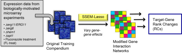 """Network training methodology for fluconazole treatment experiments. S. cerevisiae expression data from 5 microarray experiments were individually added to the original training compendium from Cosgrove et al. Separate SSEM-Lasso runs were performed on each of the modified training compendiums resulting in unique changes to the gene interaction network. Subsequent changes to gene ranks were reported, along with percentile values to evaluate how much """"better"""" or """"worse"""" a gene ranked with a given, modified training compendium."""