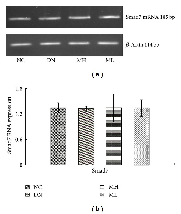 Smad7 mRNA levels by Real-Time fluorescent quantitative PCR in each group. (a) RT-PCR strip chart. (b) The gray graph shows the relative statistical values of the mRNA levels. There was not significant change of Smad7 mRNA levels in the different group.