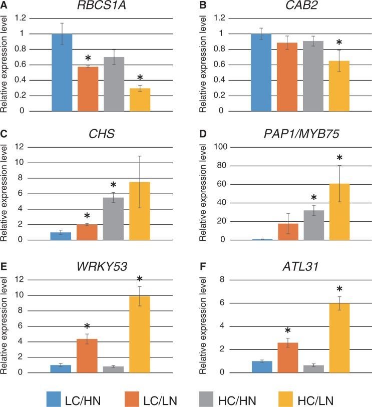 Relative expression levels of C/N- and senescence-related genes. Expression levels of C/N- and senescence-related genes in WT plants grown in each C/N medium were analyzed by qRT–PCR. Total RNA was purified from WT plants 24 h after transfer to C/N medium containing 100 or 200 mM glucose (LC or HC) and 0.3 or 30 mM nitrogen (LN or HN) from control medium (LC/HN). Relative expression levels were compared with those of WT plants grown in control C/N medium. Means ± SD of three independent experiments are shown. An asterisk indicates significant differences compared with the WT in the control C/N condition as determined by Dunnet analysis ( P