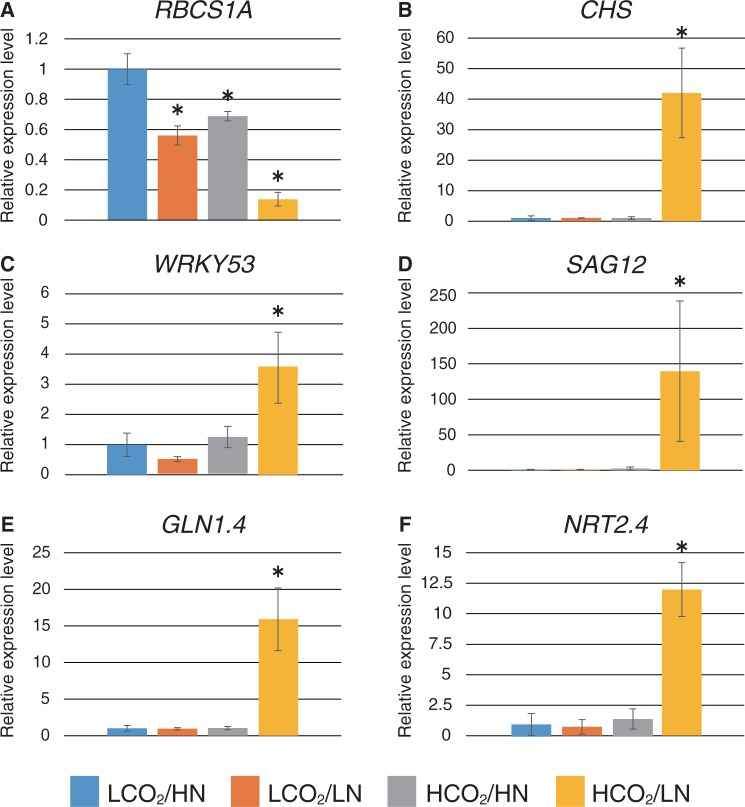Relative expression levels of C/N- and senescence-related genes. Expression levels in WT plants grown in each CO 2 /N medium were analyzed by qRT–PCR. Total RNA was purified from WT plants grown for 2.5 weeks after transfer to each CO 2 /N condition; namely, 280 or 780 p.p.m. CO 2 (LCO 2 or HCO 2 ) and 0.3 or 3 mM nitrogen (LN or HN). Relative expression levels were compared with WT plants grown under control CO 2 /N (LCO 2 /HN) condition. Means ± SD of three independent experiments with two technical replicates are shown. An asterisk indicates significant differences compared with the WT grown under the control CO 2 /N condition as determined by Dunnet analysis ( P