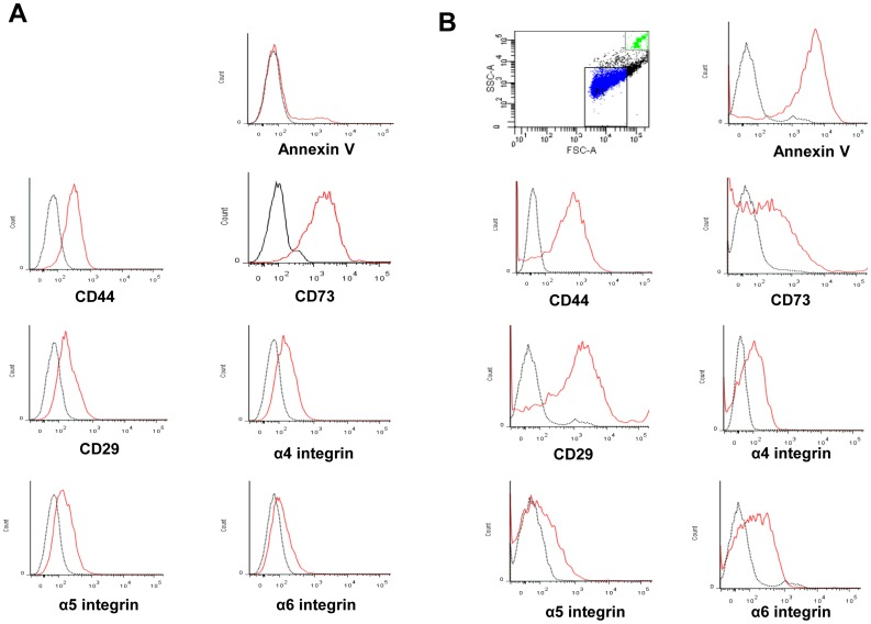 Cytofluorimetric characterization of KMSC (A) and KMSC-derived MPs (B). One µm and 6 µm beads were used as internal size standards. P1 area was compatible with 1 µm. Red lines indicate the expression of annexin V, CD44, CD73, CD29, <t>α4</t> <t>integrin,</t> α5 integrin, and α6 integrin surface molecules. Black lines indicate isotypic controls.