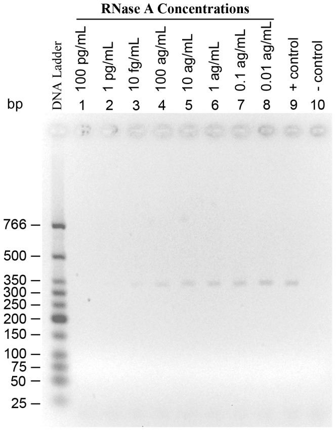 The detection limit of the RT-PCR based detection assay for RNase A. Lanes 1 to 8 indicate the concentrations of RNase A. Lanes 9 is the positive control for RT-PCR which contains no RNase A. The negative control for RT-PCR, lane 10, contains no RNase A or mRNA. The concentration of mRNA is the same in lanes 1 through 9.