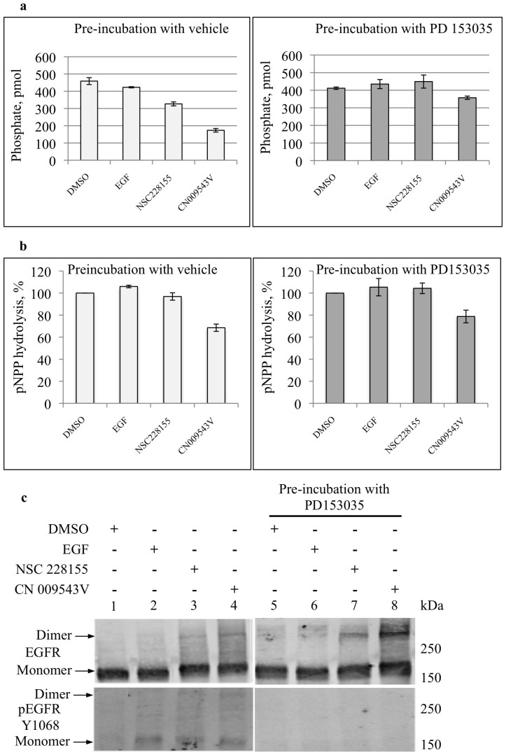 Inhibition of PTP-1B phosphatase is associated with tyrosine auto-phosphorylation of EGFR in cancer cells exposed to NBD-compounds. Histograms of PTP-1B (a) and total phosphatase (b) activities, and images of monomeric and dimeric forms of EGFR detected with Western blot (c). MDA MB468 cells were pre-incubated with a vehicle (0,2% DMSO) or 2 μM PD 153035 for 2 h, and then incubated with a vehicle or 500 ng/ml EGF or 100 μM of each of NSC 228155 or CN 009543V for 15 min at 37°C. Buffer-exchanged extracts were used for assays. Protein tyrosine phosphatase activity was measured by dephosphorylation of phosphopeptide substrate. Total phosphatase activity was measured by hydrolysis of para -nitrophenyl phosphate (pNPP), and expressed in % of the enzyme activity in extracts of the cells incubated with a vehicle (taken as 100%). Levels of PTP-1B and total phosphatase activities were normalized to total protein concentration in the extracts to be assayed. Detection of EGFR was carried out with anti-EGFR antibody recognizing the cytoplasmic domain ((c), upper image) and anti-pEGFR Y1068 antibody ((c), lower image). Electrophoretic migration of proteins was carried out in different gels; it was longer for Western blotting with anti-pEGFR Y1068 antibody.