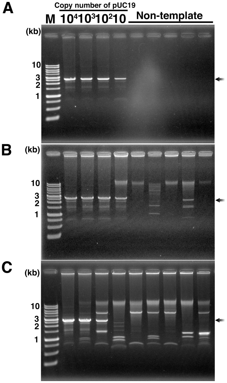 Gel analysis of RNA-primed MPRCA products to detect the contaminating DNA in Phi29 DNA polymerase. ( A ) DNA amplification with Phi29 DNA polymerase prepared by our procedure. ( B ) DNA amplification with commercially available Phi29 DNA polymerase (Epicentre, Lot No. 10710). ( C ) DNA amplification with Phi29 DNA polymerase prepared by DNase-treatment. All gel images show the Bam HI/ Eco RI double digested amplification products. Black arrow indicates the specific amplification products from <t>pUC19;</t> M, AccuRuler 1-kb DNA RTU ladder (Maestrogen). All reactions were repeated three times or more; typical results are shown.