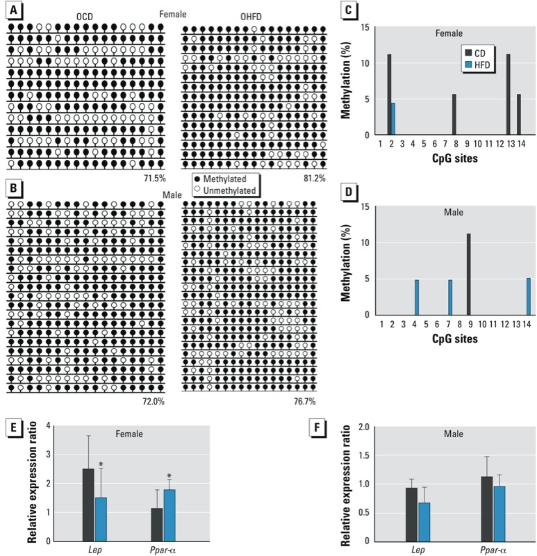 Lep and Ppar-α methylation status and gene expression in the liver of female and male OCD and OHFD mice at 7–8 weeks of age ( n = 10 mice from five litters per sex per group). DNA methylation was analyzed by bisulfite sequencing, and gene expression was evaluated by qRT‑PCR. ( A,B ) DNA methylation of Lep in liver of female ( A ) and male ( B ) offspring. Numbers indicate the percentage of methylation; blank loci indicate lost CpG. ( C,D ) DNA methylation at CpG sites of Ppar-α in liver of female ( C ) and male ( D ) offspring. CpG sites are numbered 1–14. ( E,F ) Expression of Lep and Ppar-α in liver of female ( E ) and male ( F ) offspring. * p