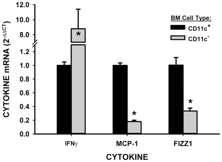 Cytokine expression in BMDC. GM-CSF-induced BMDC were separated by MACS with anti-CD11c microbeads. IFNγ, FIZZ1 and MCP-1 were detected in two distinct cell populations. *P