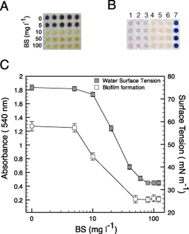 Inhibition of quorum-sensing-dependent phenotypes by the biosurfactant produced using the Cobetia sp. strain MM1IDA2H-1.A. Purple phenotype response of Chromobacterium violaceum ATCC 12472 to different concentrations (mg ml −1 ) of biosurfactant (BS) produced by the Cobetia sp. strain MM1IDA2H-1. The production of the purple pigment violacein is under quorum sensing control in C. violaceum , therefore, the loss of this phenotype in the presence of BS was associated with the inhibition of quorum sensing. At the evaluated concentrations no effect on growth was observed.B. Interaction of quorum sensing signals with the biosurfactant. HSLs enriched cell-free supernatants of A. salmonicida were mixed with the biosurfactant and used to induce the quorum sensing pigmented phenotype in the HSL not producer strain CV026. 1: C. violaceum ; 2: CV026 exposed to C. violaceum cell-free supernatant; 3: CV026 exposed to A. salmonicida cell-free supernatant; 4: strain CV026 unexposed; 5: CV026 exposed to A. salmonicida cell-free supernatant mixed with biosurfactant; 6: CV026 exposed to C. violaceum cell-free supernatant mixed with biosurfactant; 7: A. tumefaciens exposed to A. salmonicida cell-free supernatant.C. Surface tension (ST) of water at different concentrations (mg l −1 in logarithmic scale) of the BS, and V. anguillarum biofilm formation at different concentrations (mg l −1 in logarithmic scale). The CMC was established when reduction of ST was stabilized without changes (at 80 mg l −1 ). Values for ST represent the average of three independent assays.