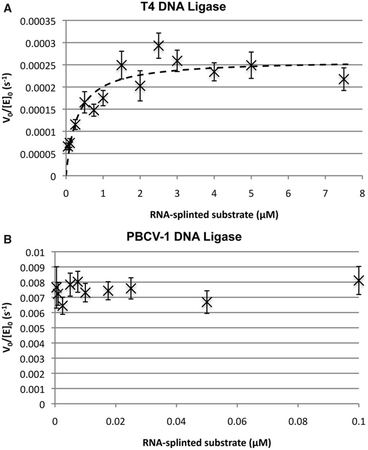 Estimation of Michaelis–Menten parameters for the ligation of DNA splinted by RNA for ( A ) T4 DNA ligase and ( B ) PBCV-1 DNA ligase. Reactions were carried out in ligase assay buffer with 1 mM ATP at 25°C. Initial reaction velocity for the consumption of substrate was measured through fits to the linear region of the reaction (generally the first ∼15% of reaction) with error bars taking into account the uncertainty in the linear fits and initial substrate and enzyme concentrations. Kinetic parameters were determined through fitting the Michaelis–Menten equation to the data by non-linear regression as described in Materials and Methods. For (A), in all reactions the only detected product was AppDNA, and the determined parameters for substrate consumption were k cat  = 2.2 ± 0.2 × 10 −4  s −1  and K M  = 300 ± 70 nM. For (B), the reaction products were a ∼ 3:1 mixture of ligated DNA to AppDNA, and the observed V 0 /[E] 0  was independent of substrate concentration over the range 0.5 nM–100 nM. The approximate k cat  is 8 × 10 −3  s −1  with an upper threshold for the K M  estimated to be 1 nM.
