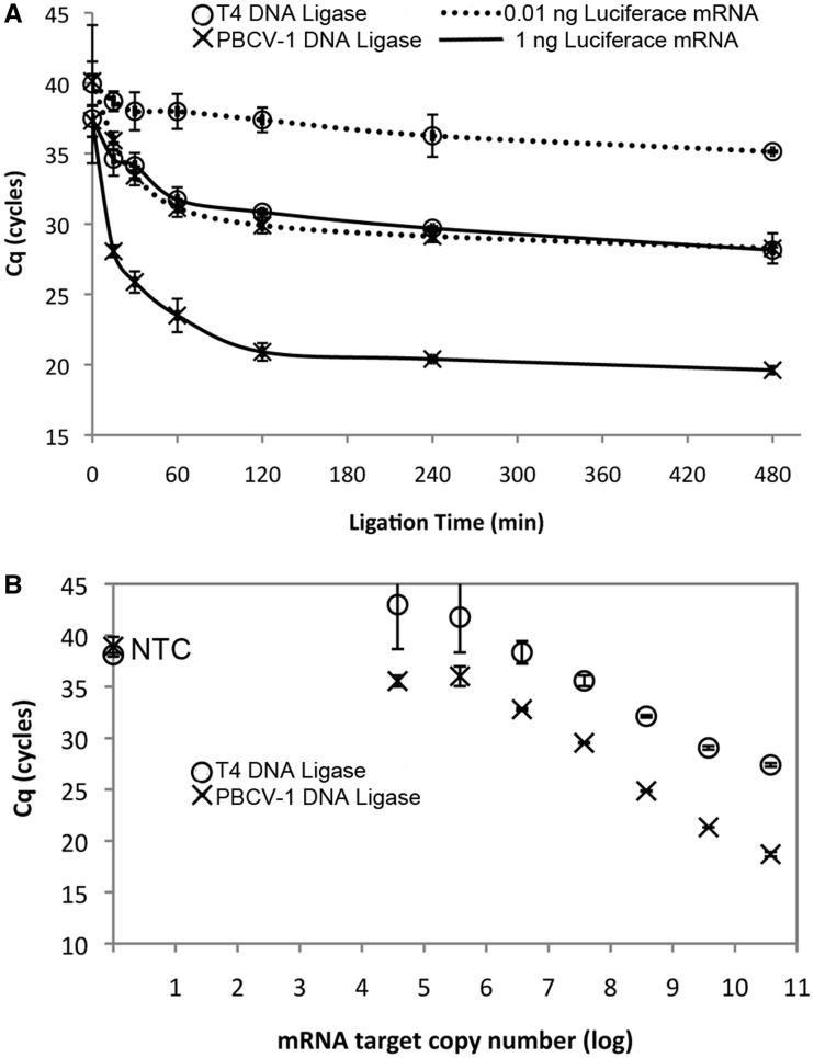 Detection of defined amounts of luciferase mRNA from a mixture with Jurkat total RNA through ligation of specific DNA probes (Probe set A) and detection by qPCR. RNA/DNA probe mixtures were annealed then incubated with either T4 DNA ligase (open circle) or PBCV-1 DNA ligase (×). The qPCR C q  for each experiment was recorded, with lower C q  indicating higher concentration of ligated probes. ( A ) Ligation time course with either 1 (solid line) or 0.01 ng (dotted line) of luciferase mRNA target, 0–8 h ligation time. ( B ) Dependence of C q  after probe ligation with target luciferase mRNA present over a 7 log concentration range using a 2 h ligation time. NTC = no template control. The error bars show one standard deviation of the average of a minimum of three replicates.