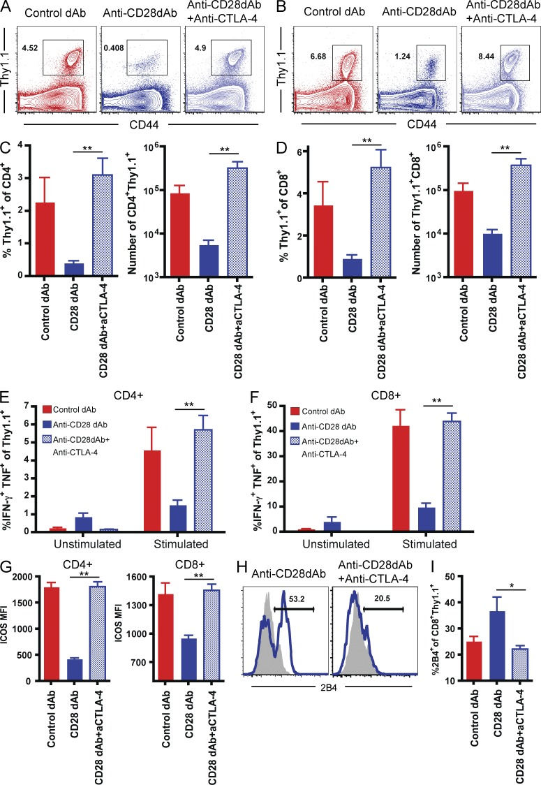 Increased efficacy and 2B4 up-regulation after selective CD28 blockade is dependent on CTLA-4–mediated signals. 10 6 Thy1.1 + OT-I and 10 6 Thy1.1 + OT-II T cells were adoptively transferred into naive B6 recipients, which were then challenged with an OVA-expressing skin graft in the presence of control Vκ dAb, anti-CD28 dAb, or anti-CD28 dAb + anti–CTLA-4 mAb dosed on days 0, 2, 4, and 6 as described in the Materials and methods. (A and B) Assessment of frequencies of donor-reactive CD4 + (A) and CD8 + (B) Thy1.1 + T cells on day 10 after transplant in draining lymph nodes. Data shown are representative and gated on CD4 + (A) or CD8 + (B) T cells. (C and D) Frequencies and absolute numbers of both CD4 + (C) and CD8 + (D) Thy1.1 + T cells in anti-CD28 dAb + anti–CTLA-4–treated animals as compared with animals treated with anti-CD28 dAb alone (P = 0.0079 for CD28 dAb versus CD28 dAb + anti–CTLA-4 groups). (E and F) IL-2 production by CD4 + Thy1.1 + T cells isolated from DLN on day 10 after transplant after ex vivo restimulation with OVA 323–339 (P = 0.0079 for CD28 dAb versus CD28 dAb + anti–CTLA-4 groups). (F) IFN-γ and TNF production by CD8 + Thy1.1 + T cells isolated from DLN on day 10 after transplant after ex vivo restimulation with SIINFEKL (P = 0.0079 for CD28 dAb vs. CD28 dAb + anti–CTLA-4 groups). (G) ICOS expression is shown on both CD4 + and CD8 + Thy1.1 + T cells isolated on day 10 after transplant from anti-CD28 dAb + anti–CTLA-4 treated animals relative to animals treated with anti-CD28 dAb alone (P = 0.0079). (H and I) 2B4 expression is shown on CD8 + Thy1.1 + T cells isolated on day 10 after transplant from anti-CD28 dAb + anti–CTLA-4–treated animals relative to animals treated with anti-CD28 dAb alone (P = 0.0159). All graphs are summary data of 2 independent experiments with a total of 8–10 mice per group. *, P