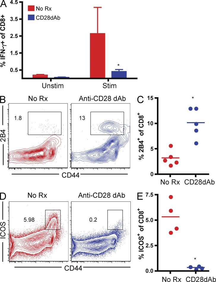 2B4 is up-regulated on endogenous, polyclonal alloreactive CD8 + T cells after treatment with anti-CD28 dAb. BALB/c skin grafts were placed onto B6 recipients that were treated with 100 µg anti-CD28 dAb on days 0, 2, 4, and 6 or left untreated. Animals were sacrificed at day 7 after transplant. (A) Splenocytes were restimulated for 4 h ex vivo with irradiated BALB/c stimulator cells, and intracellular IFN-γ was assessed. Results indicated significantly fewer CD8 + H-2K d− IFN-γ–secreting alloreactive T cells in CD28 dAb-treated recipients. (B) 2B4 expression on CD8 + T cells in grafted recipients was assessed. Data shown are representative and gated on CD8 + H-2K d− cells. (C), Percent 2B4 + of CD8 + T cells. (D) ICOS expression on CD8 + T cells in grafted recipients was assessed. Data shown are representative and gated on CD8 + H-2K d− cells. (E) Percent ICOS + of CD8 + T cells. All graphs are summary data from n = 5 animals per group (*, P