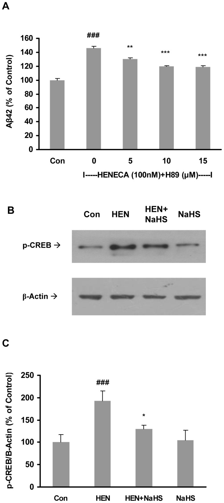 Effect of NaHS on Aβ42 production involved PKA and CREB. A : Effect of HENECA (100 nM) on Aβ42 formation was abolished by a PKA inhibitor, H89 (5, 10 and 15 µM). B–C : Representative gel (B) and histogram (C) depicting that pretreatment with NaHS (100 µM, 12 hours) attenuated the effects of HENECA (100 nM, 24 hours) on phosphorylation of CREB. Control values were adjusted to 100%. Data are given as means ± S.E.M, n = 4–6. ### p