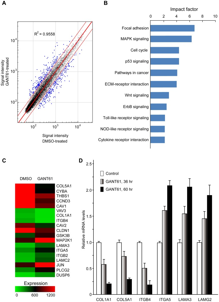 Gene expression profiles in GANT61-treated SKOV3 cells. ( A ) Identification of differentially expressed genes (DEGs) in GANT61-treated SKOV3 cells. Cells were treated with GANT61 (20 µM) or DMSO for 60 hr, and total <t>RNA</t> was extracted as described in Methods . Changes in gene expression were determined by <t>cDNA</t> microarray gene profiling using the Illumina Human HT expression BeadChip V4 (Illumina Inc., San Diego, CA). Differential expressions for the DEGs are shown. ( B ) The top 11 canonical signaling pathways influenced by inhibition of Gli1/Gli2 function in SKOV3 cells. The top 11 canonical signaling pathways, determined by IPA, that were significantly up-regulated or down-regulated by GANT61 treatment in SKOV3 cells, are shown. The 412 DEGs were mapped to the IPA-defined network. The significant P -values that determine the probability that the association between the genes in the dataset and the canonical pathway is by chance alone were calculated by Fisher's exact test, and are expressed as −log ( P -value). ( C ) Heat map of DEGs in the focal adhesion signal pathway in GANT61-treated SKOV3 cells. The heat map shows that 17 genes were significantly differentially expressed, including seven up-regulated genes and 12 down-regulated genes, in the GANT61-treated compared to control SKOV3 cells. ( D ) Selected DEGs from cDNA array gene expression profiling analyzed by real-time PCR. SKOV3 cells were treated with DMSO or GANT61 for the indicated times, total RNA was extracted for real-time PCR as described in Methods using the primer sets in Table 1 . The data represent the mean ± SD of three determinations, and GAPDH was used to normalize the relative mRNA levels.