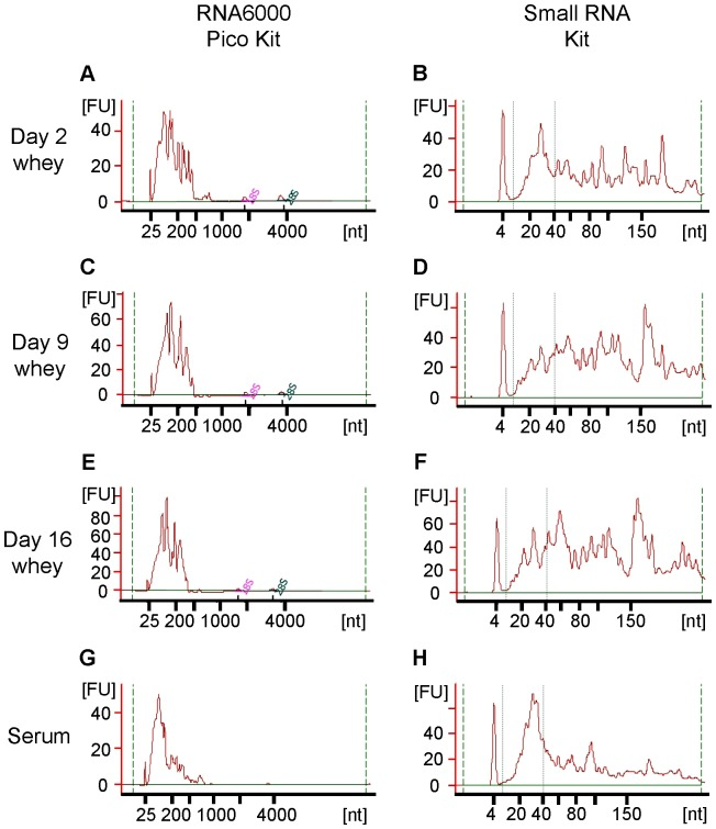 Bioanalyzer analysis of RNAs in rat whey and serum. (A, B) Day 2 whey; (C, D) Day 9 whey; (E, F) Day 16 whey; (G, H) Serum; (A, C, E, G) Analysis using the RNA 6000 Pico Kit; (B, D, F, H) Analysis using the Small RNA Kit. Whey RNA concentrations were very high (especially in day 2 whey), so diluted RNA results are shown in this figure. FU = fluorescence units.