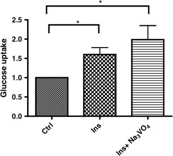 Effects of insulin on metacestode glucose uptake. Uptake of C 14 -D-glucose by metacestode vesicles in the presence of 10 μM insulin alone,and insulin together with Na 3 VO 4 . Control was set to 1 and results were normalised against the control. (*) P values below 0.05, (**) very significant for P between 0.001 and 0.01, (***) extremely significant for P