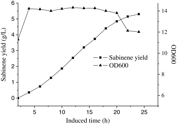 The time course of sabinene production by HB4 harboring pHB7 and pTrcLower in fed-batch fermentation. sabinene accumulation (■) and cell growth (▲). Induction was carried out at 12 h at the OD 600 of 11. The maximum concentration of sabinene was 2.65 g/L with an average productivity of 0.018 g h -1 g -1 dry cells, and the conversion efficiency of glycerol to sabinene (gram to gram) was 3.49%.