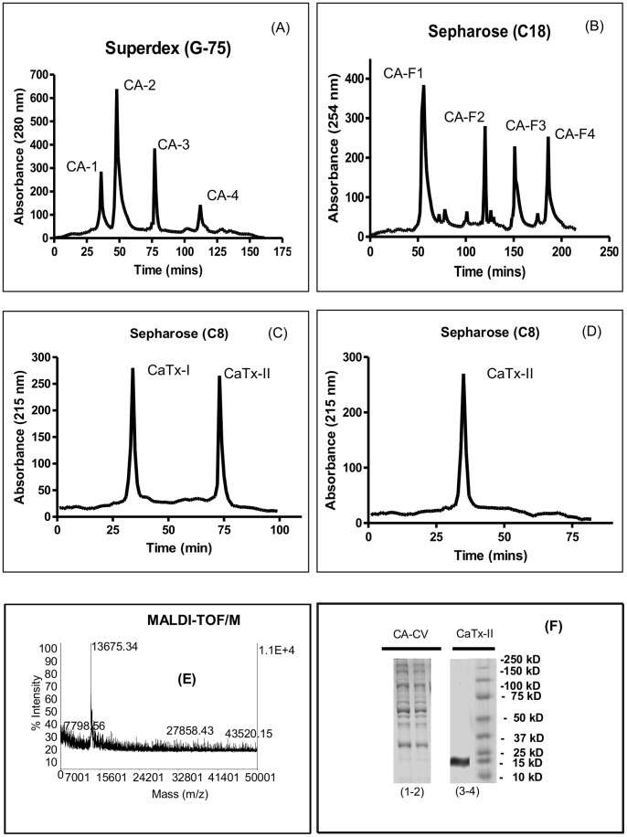 Purification of Crotalus adamanteus toxin-II (CaTx-II) from Eastern Diamondback Rattlesnake venom. (A) High Performance Liquid Chromatography (HPLC) profiles of C. adamanteus crude venom from a Superdex G-75 column, (B–D) Reverse-phase (RP)-HPLC chromatograms from Sepharose C18 and C8 columns, (E) Molecular mass of pure CaTx-II, (F) Sodium dodecyl sulphate-polyacrylamide gel electrophoresis (SDS-PAGE) profile of RP-HPLC fractions, lanes indicate: CA-CV C. adamanteus crude venom (1–2), lane (4) homogeneity of CaTx-II confirmed by SDS-PAGE as 15 kDa of CA-F1 - reverse-phase fraction and (5) marker, 25 µg of protein loaded per lane, respectively.