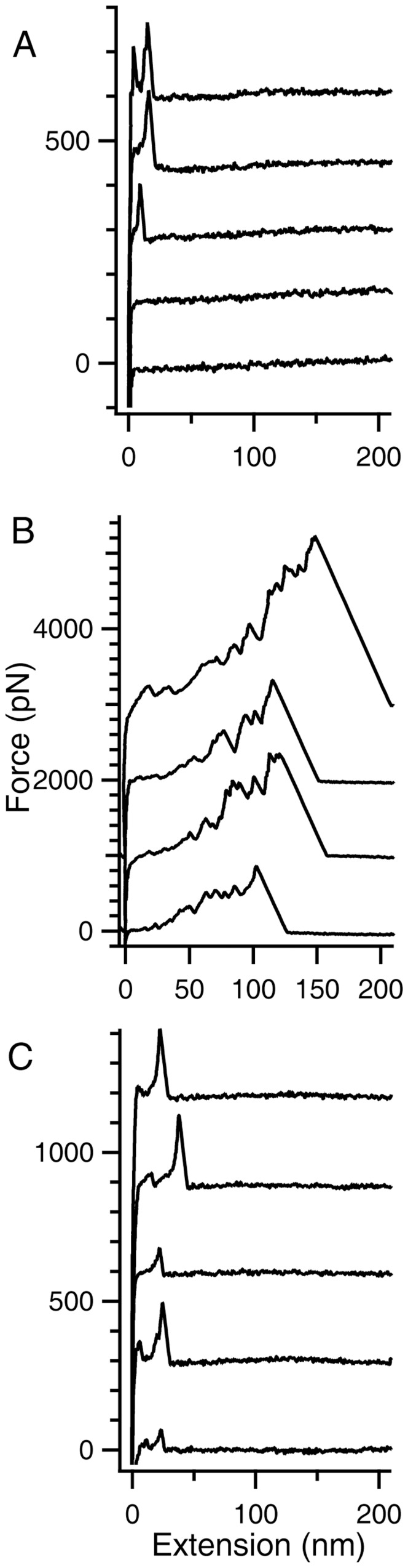 Force-versus-extension (FX) traces of HEWL aggregates from single-molecule force spectroscopy. A) FX traces obtained by repeated approach and retraction of AFM cantilever tip onto the gold coverslip on which 40 µl of freshly prepared HEWL at pH 12.2 was added. Each trace is offset by 150 pN, with respect to the previous trace. B) Representative FX traces obtained by pulling HEWL aggregates formed after 4 days of incubation at pH 12.2. Each trace is offset by 1000 pN with respect to the previous one. See Figure S3 for more traces under this condition. C) FX traces of HEWL at pH 12.2 incubated with iodoacetamide at a final concentration of 12 mM for 3 days.