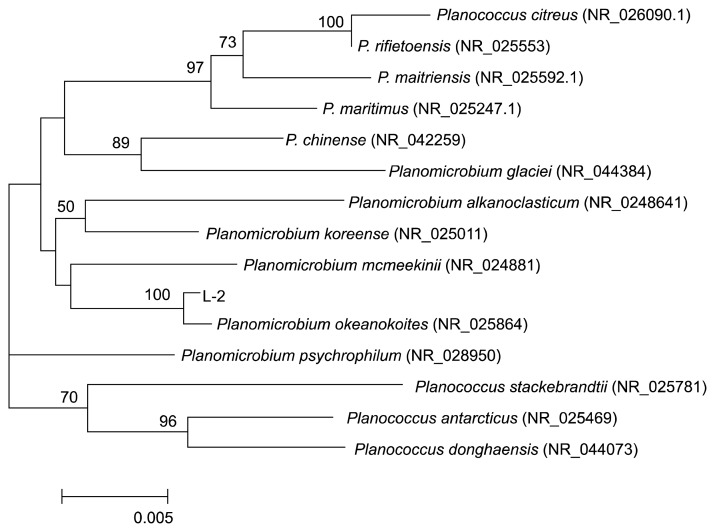 Phylogenetic tree of strain L-2 on <t>16S</t> <t>rRNA</t> gene sequences.