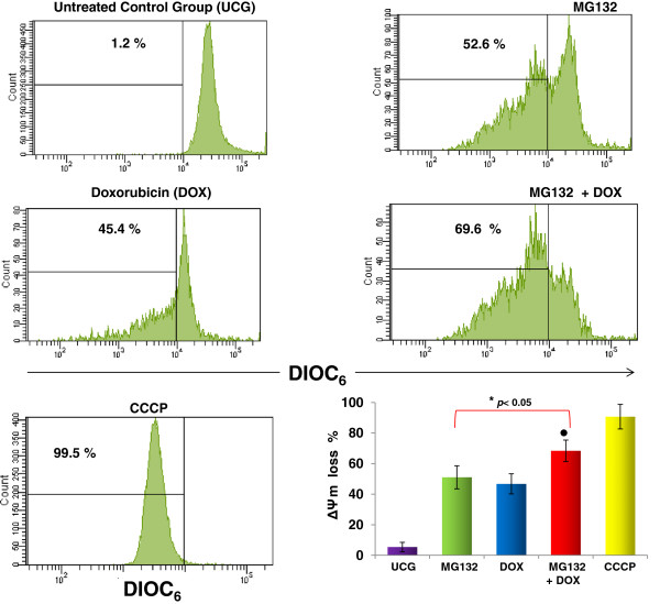MG132 + DOX induces potential mitochondrial membrane loss. U937 cells were cultured and treated with MG132 (1 μM), DOX 1 μM, or MG132 + DOX. After 24 h, the cells were harvested and the ΔΨm was assessed by flow cytometry using DIOC 6 staining. Protonophore Cyanide m-chorophenylhydrazone (CCCP) was used as a positive control. Representative histograms of each treatment are displayed. For each sample, at least 20,000 events were acquired in a FACSAria-I cell sorter and the data were analyzed with FACSDiva software. The graph shows the results as mean ± the Standard deviation (SD) of three independent experiments performed in triplicate. Statistical analysis, the Mann–Whitney U test. *p