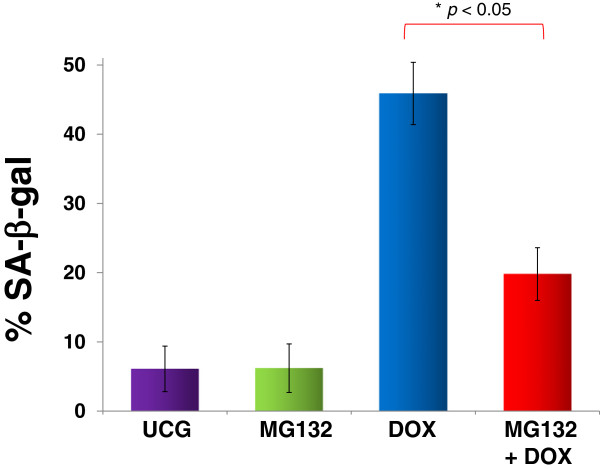 Assessment of senescence in U397 human leukemic cells treated with <t>MG132</t> (1 μM), Doxorubicin (DOX) 1 μM, or MG132 + DOX. U937 cells (1 × 10 6 ) were incubated alone or with different treatments for 24 h at 37°C in a humid atmosphere containing 5% CO2 and 95% air in RPMI-S medium. After incubation, the cells were washed in the same medium, and senescence was determined by measuring SA-β-gal utilizing flow cytometry. For each sample, at least 20,000 events were acquired in a FACSAria-I cell sorter and the data were analyzed with FACSDiva software. Results are shown as % and represent the mean ± the Standard deviation (SD) of three independent experiments performed in triplicate. Statistical analysis, the Mann–Whitney U test. *p