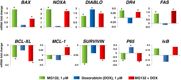 Expression of pro- and antiapoptotic genes in U937 human leukemic cells treated with Doxorubicin (DOX), MG132, and MG132 + DOX. U937 human leukemia cells were incubated, alone or in combination, with DOX 1 μM, MG132 (1 μM), or MG132 + DOX for 3 h. Gene expression was assessed by quantitative real-time PCR. Data are expressed as relative mRNA fold-change. RPL32 were used for normalization, and the value of untreated cells, as calibrator. Variations were considered significant at ≥30% compared with the constitutive gene. In all cases, the Standard deviation (SD) was not > 0.08.
