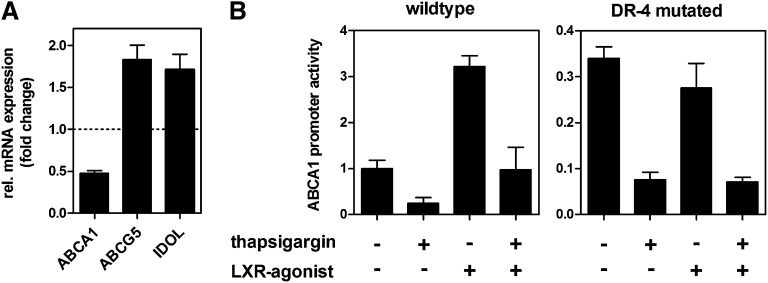 ABCA1 is regulated independently of LXR during ER stress. A: HepG2 cells were treated with 0.1 µM thapsigargin in media containing 10% LPDS for 24 h. Gene expression was determined by qRT-PCR and normalized to 18s expression. mRNA expression of ABCA1 was compared with expression of ABCG5 and IDOL, which are established LXR target genes in hepatic cells. ABCA1 is regulated differently compared with ABCG5 and IDOL. Data show means ± SD from three experiments. B: HepG2 cells were transfected with luciferase reporter vectors containing wild-type or LXR-binding site (DR-4) mutated constructs of the ABCA1 core promoter (−175/+224). After 4 h, cells were treated with 0.1 µM thapsigargin and/or 5 µM of LXR agonist TO901317 in media containing 10% LPDS for another 24 h. Promoter activity was determined using dual luciferase assay. Data show one representative experiment out of three independently performed experiments. Promoter activity was normalized to the activity of the wild-type construct under untreated conditions.