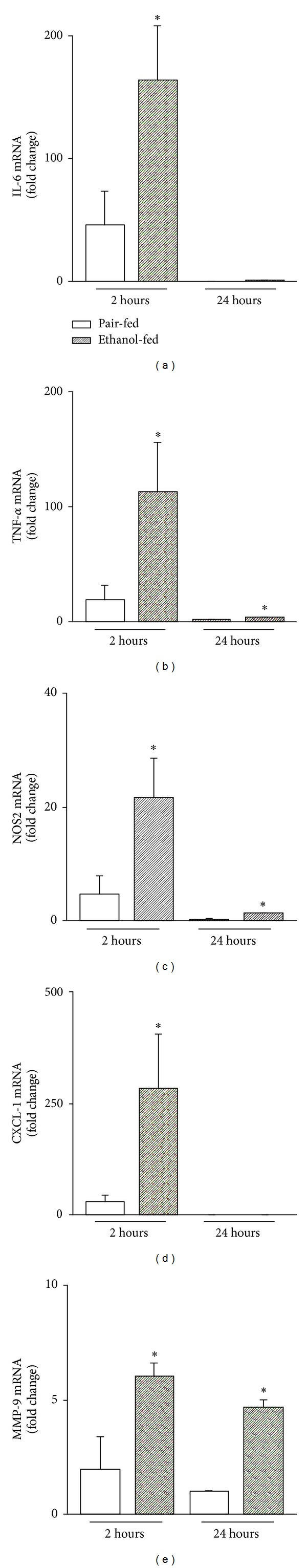 NF- κ B target gene expression in isolated Kupffer cells in response to LPS after ethanol feeding F4/80 + macrophages were isolated from livers of ethanol-, pair-fed mice, respectively, and stimulated with LPS (10 μ g/mL, Figure 7 ) for 2 h and 24 h. Supernatants were measured for mRNA levels of IL-6 (a), TNF- α (b), NOS2 (c), CXCL-1 (d), and MMP-9 (e) by RT-PCR. Data (mean ± SEM) are expressed as fold change compared with corresponding medium controls (unstimulated) and are representative of five to eight separate experiments. * P