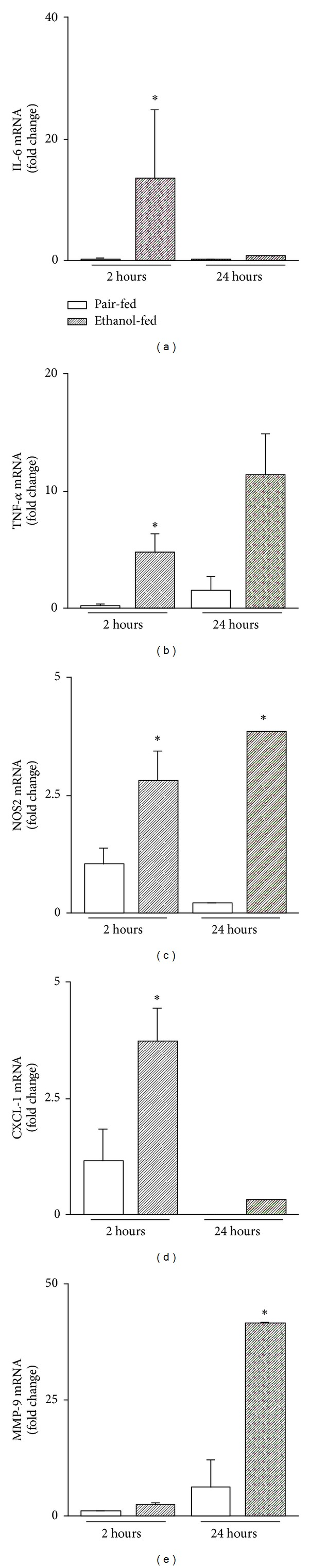 NF- κ B target gene expression in isolated Kupffer cells in response to TNF- α after ethanol feeding F4/80 + macrophages were isolated from livers of ethanol-, pair-fed mice, respectively, and stimulated with TNF- α (500 ng/mL) for 2 h and 24 h. Supernatants were measured for mRNA levels of IL-6 (a), TNF- α (b), NOS2 (c), CXCL-1 (d), and MMP-9 (e) by RT-PCR. Data (mean ± SEM) are expressed as fold change compared with corresponding medium controls (unstimulated) and are representative of five to eight separate experiments. * P