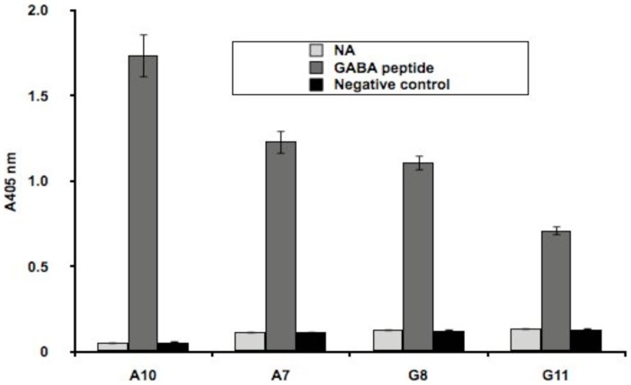 Binding of phage-expressed scFvs affinity selected with GABA subunit peptides. Equal amounts of biotinylated target peptides or non-target peptide (negative control) were captured on NeutrAvidin™ (NA) coated microtiter plate wells, and after washing the binding of equivalent amounts of phage particles, displaying different scFvs, was monitored by ELISA. A biotinylated anti-Flag antibody was used to normalize the amounts of scFv-displaying phage particles added to each well. Error bars correspond to the standard deviation of triplicate measurements of the optical density of the wells at 405 nm wavelength. A7, G8 and G11 are anti-β2 binders while A10 is the anti-α1 binder.