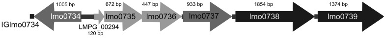 The organization of the genomic region containing the lmo 0737 to lmo0739 cassette that is present only in the L. monocytogenes serotypes IVb-v1 and 1/2a strains, confirmed by microarray analysis.