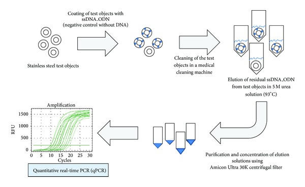 Overview of the quantification of the residual ssDNA_ODN amount on test objects after cleaning in a medical cleaning machine. Stainless steel test objects are coated with a defined amount of ssDNA_ODN and cleaned in a medical cleaning machine. Using 5 M urea solution at 93°C, residual ssDNA_ODN is eluted from the surface of test objects. Eluates are purified and concentrated using Amicon Ultra 30K centrifugal filters. The ssDNA_ODN amount is quantified using quantitative real-time PCR (qPCR).