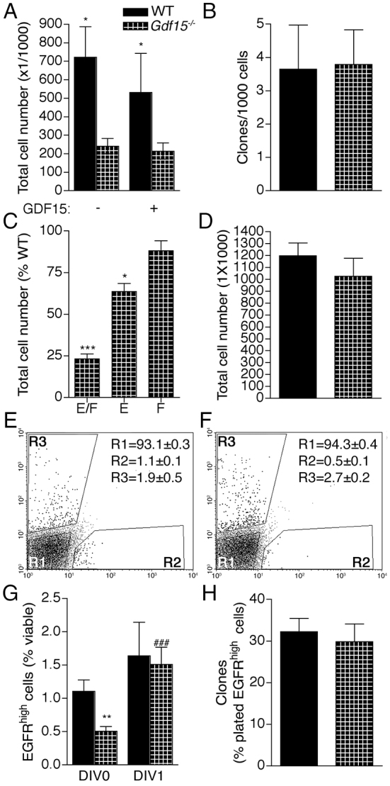 GDF15 promotes the response to <t>EGF</t> and EGFR expression in hippocampal precursors. (A-D) Quantitative analysis of the total cell number (A,C,D) and clones (B) obtained upon plating E18 (A-C) and E14 (D) wild-type and Gdf15 -/- cells in both EGF (E) and <t>FGF2</t> (F) (A,B,D), or E and/or F, as indicated (C). In A, exogenous GDF15 was added as shown. In C, values are the percentage variation of the total cell number scored in parallel wild-type cultures grown in both growth factors. (E,F) Representative dot plots of dissociated E18 wild-type (E) and Gdf15 -/- (F) HP after staining with EGF-Alexa 488 and PI to reveal EGFR low (R1), EGFR high (R2) and dead cells (R3). Values represent the means±s.e.m. of the percentage of total cells in each gate. (G,H) Quantitative analysis of the EGFR high cell numbers in the E18 wild-type and Gdf15 -/- HP measured at day in vitro (DIV) 0, or after 24 hours exposure to FGF2 (DIV 1) (G) and of the percentage of E18 wild-type and Gdf15 -/- EGFR high cells capable of undergoing clone formation upon plating at DIV0 (H). * and # indicate values that are significantly different from the corresponding wild-type samples and the counterpart at DIV0, respectively. * P ≤0.05; ** P ≤0.01; ***,### P ≤0.001; n ≥3.