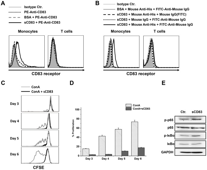 Biological activity determination of sCD83. sCD83 bound to the putative CD83 receptor on monocytes but not on T cells. (A and B) PBMC were incubated with soluble CD83 or BSA, and then coated with either PE-anti-CD83 (A) or anti-His followed by FITC-Anti-mouse IgG (B). Cells were then coated with anti-CD3 or anti-CD14 to distinguish the monocyte and T cells. CD14 + monocytes and CD3 + T cells were gated and analysis for CD83 receptor expression. (C) sCD83 suppressed ConA-stimulated PBMC proliferation. PBMCs were stained with CFSE, stimulated with ConA, and cultured with or without 20 µg/mL of sCD83 for the indicated time periods. (D) The means ± the standard error of the mean (SEM) of the MFI from (C) are shown as bar graphs. (E) sCD83 activated the NF-κB pathway. Isolated human PBMCs stimulated by sCD83 (10 µg/mL) were cultured in RPMI 1640 medium that contained 10% fetal bovine sera at 37°C for 12 h. The PBMCs were collected and lysed to detect the activation of the NF-κB pathway using Western blotting.