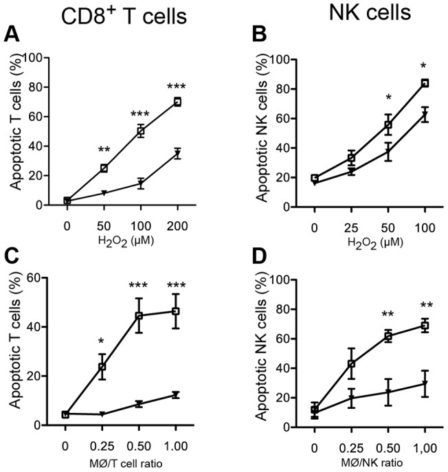 Protection of lymphocytes from ROS-induced apoptosis by an ERK pathway inhibitor. MACS-purified human CD8 + T cells or NK cells were preincubated with the ERK1/2 inhibitor PD98059 (25 µM) (filled triangle) for 1 h at 37°C. The T cells and NK cells were then incubated overnight in the presence of PD98059 with H 2 O 2 at indicated concentrations ( A–B ) or with ROS-producing monocytes (MØ) at indicated MØ:NK ratios ( C–D ). Lymphocyte viability was assessed using the Live/Dead Fixable Violet Dead Cell Stain kit. ERK inhibitor-equivalent concentrations of DMSO were used as control (open square). Results obtained using DMSO did not significantly differ from PBS. Data are the mean ± SEM of results obtained using blood from 3–7 donors. *P