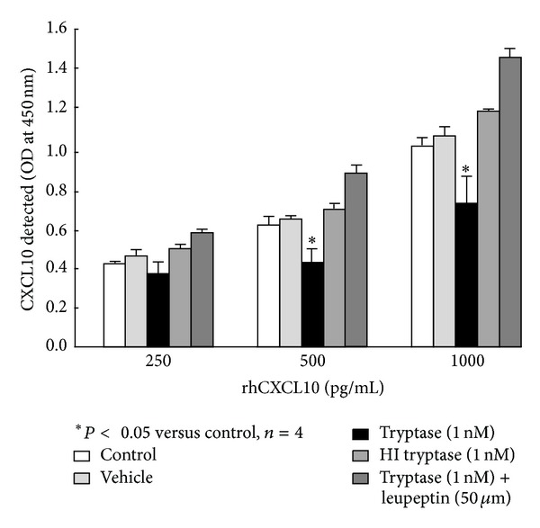 The proteolytic effects of tryptase on rhCXCL10 in a cell free system. The rhCXCL10 made up in serum-free DMEM supplemented with 0.1% BSA was placed in 96-well culture plates and incubated with tryptase ± leupeptin, heat-inactivated tryptase (HI), or its vehicle for 24 h under the same conditions as the ASM cells. CXCL10 was detected using ELISA. * P