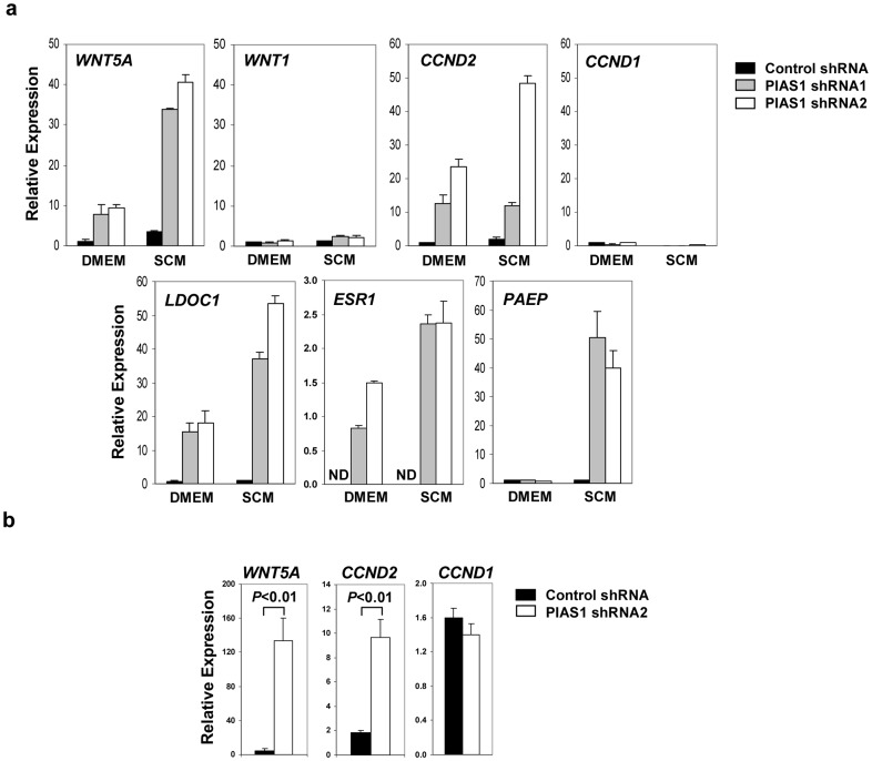"""PIAS1 regulates the expression of a panel of tumor suppressor genes. ( a ) Real-time quantitative PCR (Q-PCR) assay. MDA-MB231 cells containing control shRNA, PIAS1 shRNA1 or shRNA2 were cultured in DMEM plus 10% FBS (DMEM) or Stem Cell Media (SCM) for 30 h, and total RNA was used for Q-PCR assays with gene-specific primers. The gene names are labeled at the top left of each panel. The data were normalized by beta-Actin ( ACTB ) and presented as """"Relative Expression"""" as compared to that in control shRNA cells under DMEM condition, which was set as """"1"""" except for the ESR1 gene (the expression was not detectable in control shRNA cells). Shown is a representative of 3 independent experiments. Error bars represent SD. ND, not detected. See also Table S1 and Table S2 in File S1 . ( b ) Same as in a except that total RNA from fat pad tumor xenograft samples were used (n = 5). Error bars represent SEM. P values were determined by non-paired t -test."""