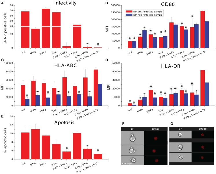 Effects of combinatorial of IFNβ, TNFα, and IL1β treatment on DCs infected with the pandemic influenza A Cal/09 strain . (A) Infectivity assayed by NP expression (* p ≤ 0.05 compared to cells exposed to IFNβ). (B) Expression of the maturation marker CD86. (C) Expression of the maturation marker HLA-ABC. (D) Expression of the maturation marker HLA-DR (* p ≤ 0.05 compared to cells exposed to the triple combination of TNFα, IFNβ, and IL1b). (E) Apoptosis assayed by assessing nuclear fragmentation and cell granularity by imaging flow cytometry (* p ≤ 0.05 compared to untreated cells). (F) Sample images of non-apoptotic cells. (G) Sample images of apoptotic cells.