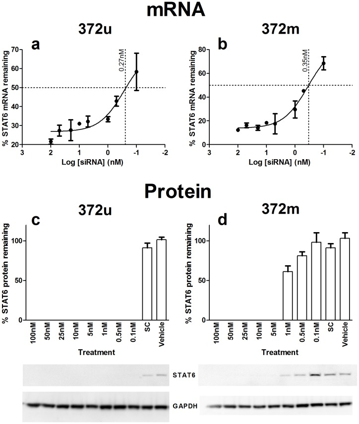 Small interfering RNA suppression of STAT6 expression in vitro. A549 lung epithelial cells were transfected with a range of <t>siRNA</t> concentrations (0.1 – 100 nM) and total RNA and protein extracted 72 hours later. The percent STAT6 mRNA remaining at each of the concentrations tested was used to calculate the 50% inhibitory concentration of 372u (a) and 372 m (b); 0.27nM and 0.35nM, respectively. Western blot analysis was then used to confirm STAT6 protein ablation, which was observed at all concentrations of 372u tested (c) and at concentrations ≥ 5 nM for 372 m (d). SC = Silencer Select Negative Control No. 1 siRNA, vehicle = transfection reagent only. Values presented are mean ± S.E.M (n = 3).